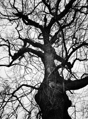 I want to be a tree...